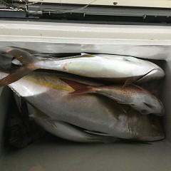 9月 29日(火) 午後・ウタセ真鯛の写真その10
