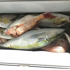9月 30日(水) 午後便・ウタセ真鯛の写真その7