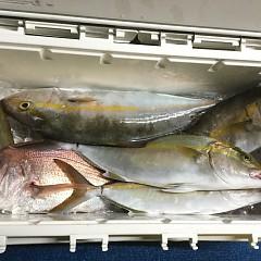 9月 30日(水) 午後便・ウタセ真鯛の写真その8