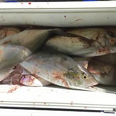 9月 30日(水) 午後便・ウタセ真鯛の写真その9