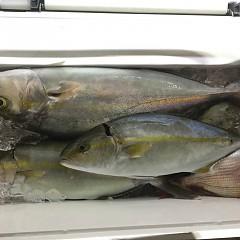 9月 30日(水) 午後便・ウタセ真鯛の写真その10
