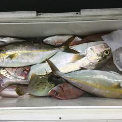 9月 30日(水) 午後便・ウタセ真鯛の写真その12