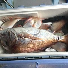 10月 12日(月) 午前・午後・ウタセ真鯛の写真その5