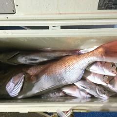10月 12日(月) 午前・午後・ウタセ真鯛の写真その6