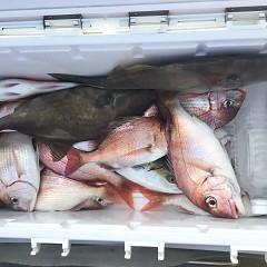 10月 12日(月) 午前・午後・ウタセ真鯛の写真その7