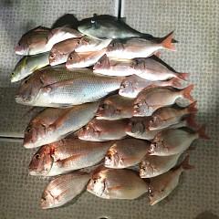 10月 13日(火) 午後便・ウタセ真鯛の写真その12