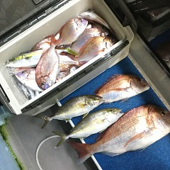 10月 15日(木) 午前・午後・ウタセ真鯛の写真その4