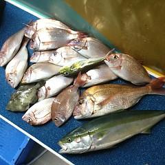 10月 15日(木) 午前・午後・ウタセ真鯛の写真その6