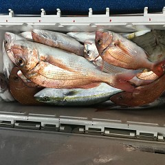 10月 15日(木) 午前・午後・ウタセ真鯛の写真その7