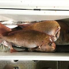 10月 15日(木) 午前・午後・ウタセ真鯛の写真その8