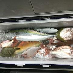 10月 16日(金) 午後・ウタセ真鯛の写真その8
