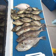 10月 19日(月) 午前便・カワハギ釣りの写真その1