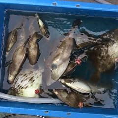 10月 19日(月) 午前便・カワハギ釣りの写真その2