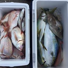 10月 24日(土) 午前便・ウタセ真鯛の写真その9