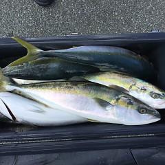 10月 24日(土) 午前便・ウタセ真鯛の写真その11