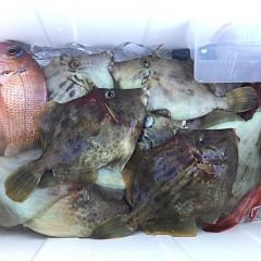 10月 26日(月) 午前便・カワハギ釣りの写真その3
