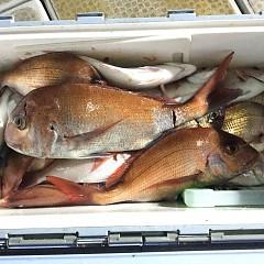 10月 29日(木) 午後便・ウタセ真鯛の写真その3
