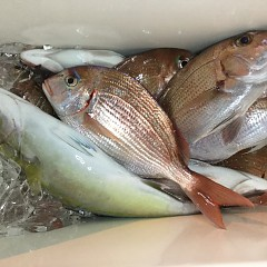 10月 29日(木) 午後便・ウタセ真鯛の写真その4