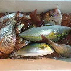 10月 29日(木) 午後便・ウタセ真鯛の写真その5