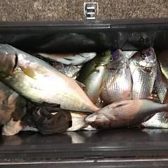 10月 29日(木) 午後便・ウタセ真鯛の写真その7