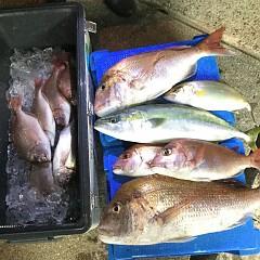 10月 30日(金) 午前・午後・ウタセ真鯛の写真その1