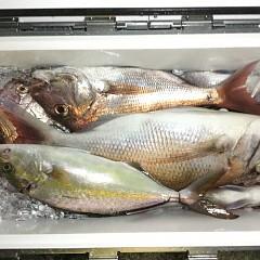 10月 30日(金) 午前・午後・ウタセ真鯛の写真その2