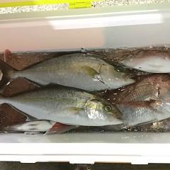 10月 30日(金) 午前・午後・ウタセ真鯛の写真その3