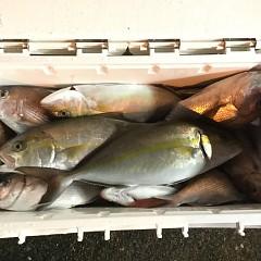 11月2日(月)午後便・ウタセマダイ釣りの写真その2