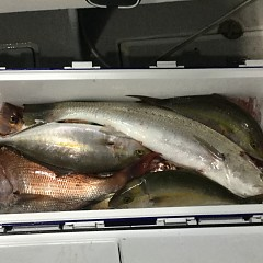 11月2日(月)午後便・ウタセマダイ釣りの写真その8