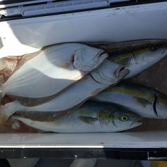 11月 11日(水)午前・午後・ヒラメ釣りの写真その6