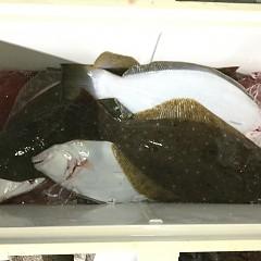 11月 13日(金) 午前・午後・ヒラメ釣りの写真その7