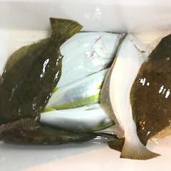 11月 13日(金) 午前・午後・ヒラメ釣りの写真その10