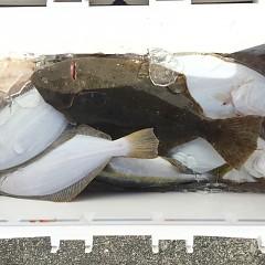 11月 14日(土) 午前便・ヒラメ釣り 午後・ウタセ真鯛の写真その1