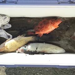 11月 14日(土) 午前便・ヒラメ釣り 午後・ウタセ真鯛の写真その2