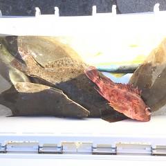 11月 14日(土) 午前便・ヒラメ釣り 午後・ウタセ真鯛の写真その3