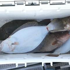 11月 16日(月) 午前・午後・ヒラメ釣りの写真その12