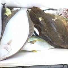 11月 17日(火) 午前・ヒラメ釣り 午後・ウタセ真鯛の写真その2