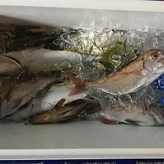 11月 17日(火) 午前・ヒラメ釣り 午後・ウタセ真鯛の写真その5
