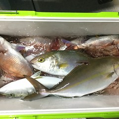 11月 19日(木) 午後・ウタセ真鯛の写真その4