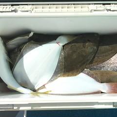 11月 19日(木) 午後・ヒラメ釣りの写真その10