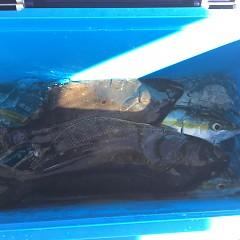 11月 19日(木) 午後・ヒラメ釣りの写真その11