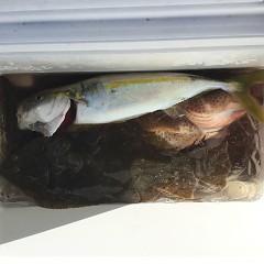 11月 19日(木) 午後・ヒラメ釣りの写真その12