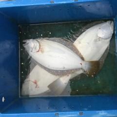 11月 20日(金) 午前便・ヒラメ釣りの写真その1