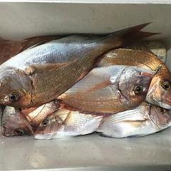 11月26日(木)午後便・ウタセ真鯛釣りの写真その3