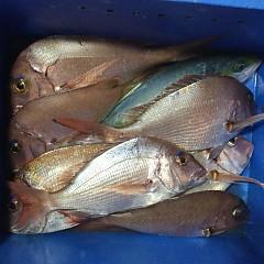 11月26日(木)午後便・ウタセ真鯛釣りの写真その4