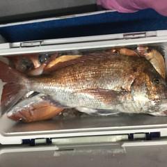 11月26日(木)午後便・ウタセ真鯛釣りの写真その5