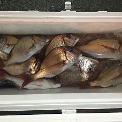 11月26日(木)午後便・ウタセ真鯛釣りの写真その7