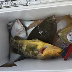 11月 27日(金) 午前・ヒラメ釣り 午後・ウタセ真鯛の写真その5