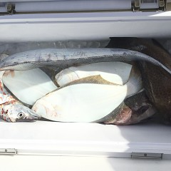 11月 29日(日) 午前・ヒラメ釣りの写真その9