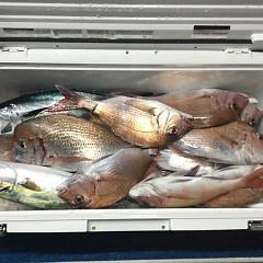 11月 29日(日) 午後・ウタセ真鯛の写真その1